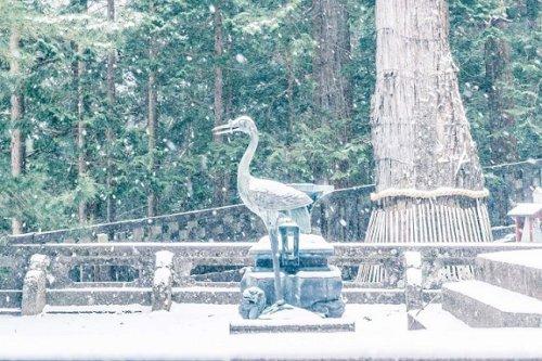 画像日光東照宮の鶴と亀