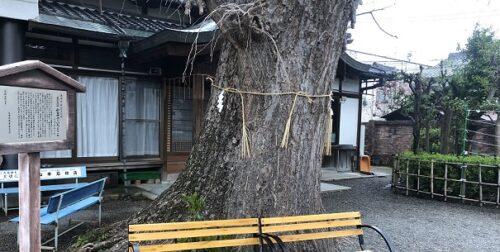 和田神社のいちょう(大津)
